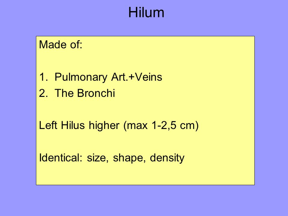 Hilum Made of: 1. Pulmonary Art.+Veins 2. The Bronchi