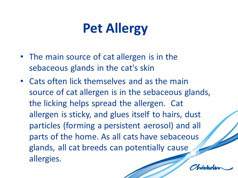 Pet Allergy The main source of cat allergen is in the sebaceous glands in the cat s skin.