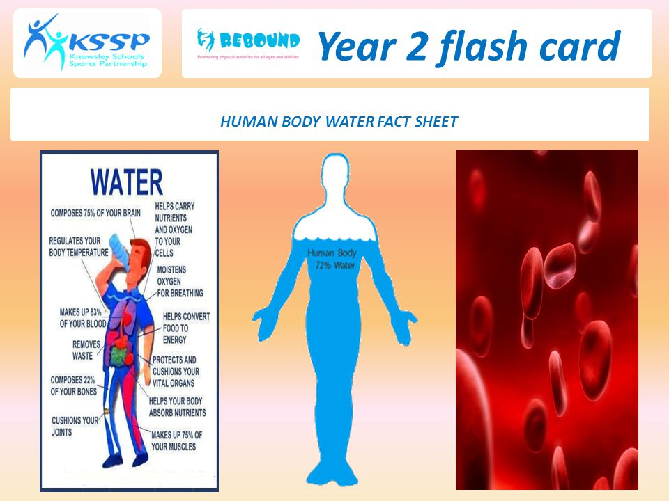 HUMAN BODY WATER FACT SHEET