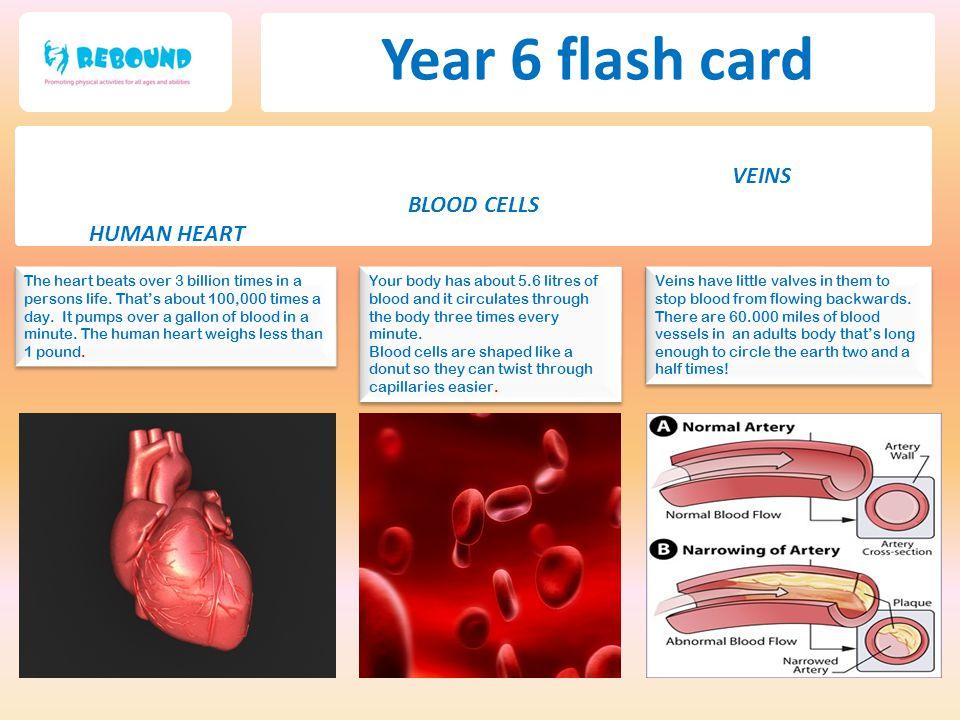 Year 6 flash card VEINS BLOOD CELLS HUMAN HEART
