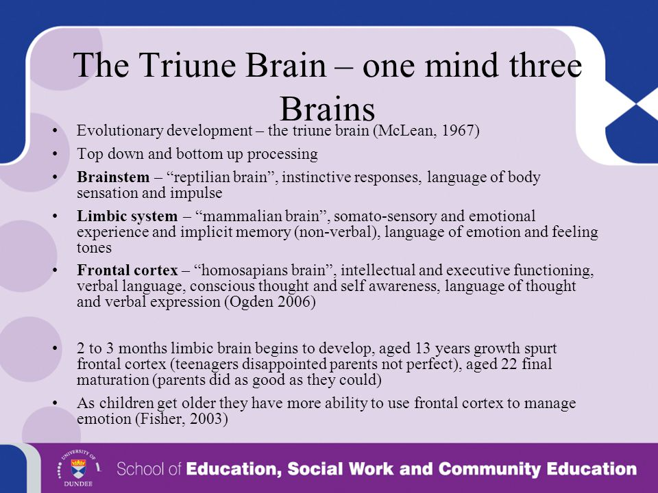 The Triune Brain – one mind three Brains