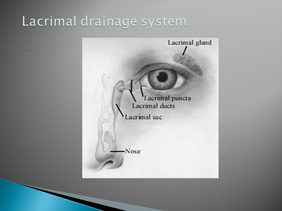Lacrimal drainage system