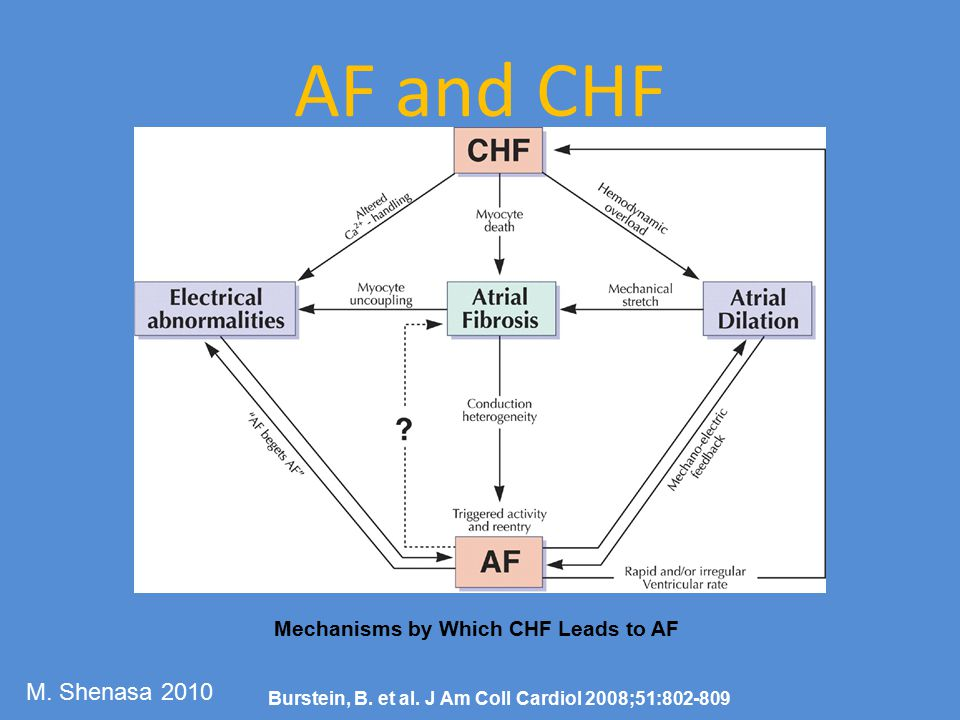 AF and CHF M. Shenasa 2010 Mechanisms by Which CHF Leads to AF