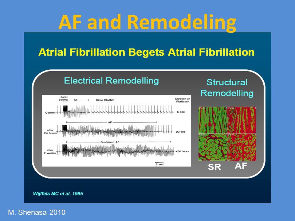 AF and Remodeling M. Shenasa 2010