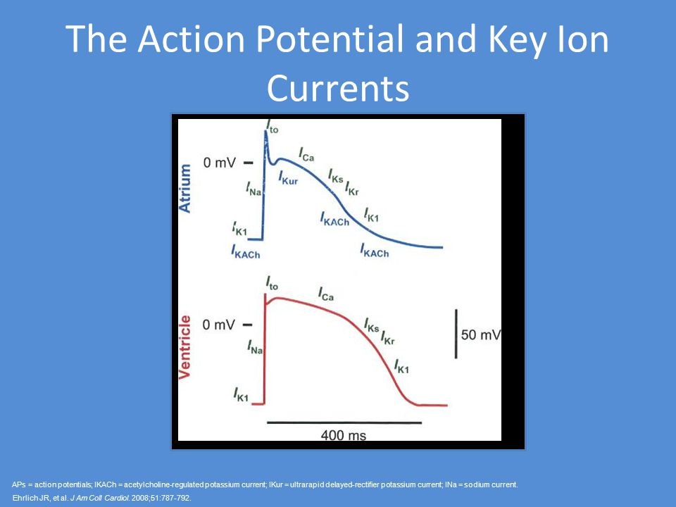The Action Potential and Key Ion Currents