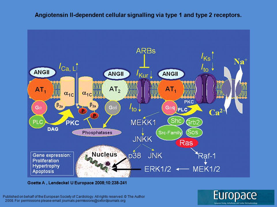 Angiotensin II-dependent cellular signalling via type 1 and type 2 receptors.