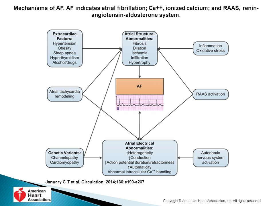 Mechanisms of AF. AF indicates atrial fibrillation; Ca++, ionized calcium; and RAAS, renin-angiotensin-aldosterone system.