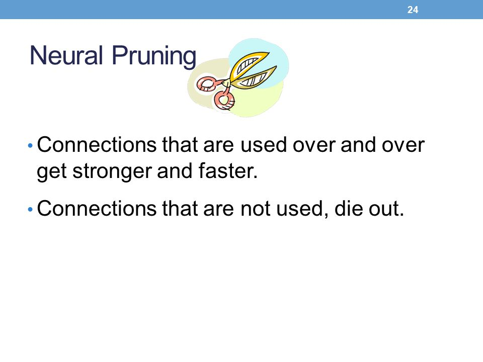 Neural Pruning Connections that are used over and over get stronger and faster.