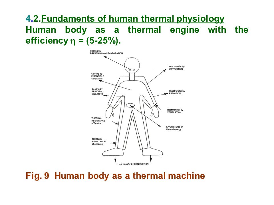 4.2.Fundaments of human thermal physiology