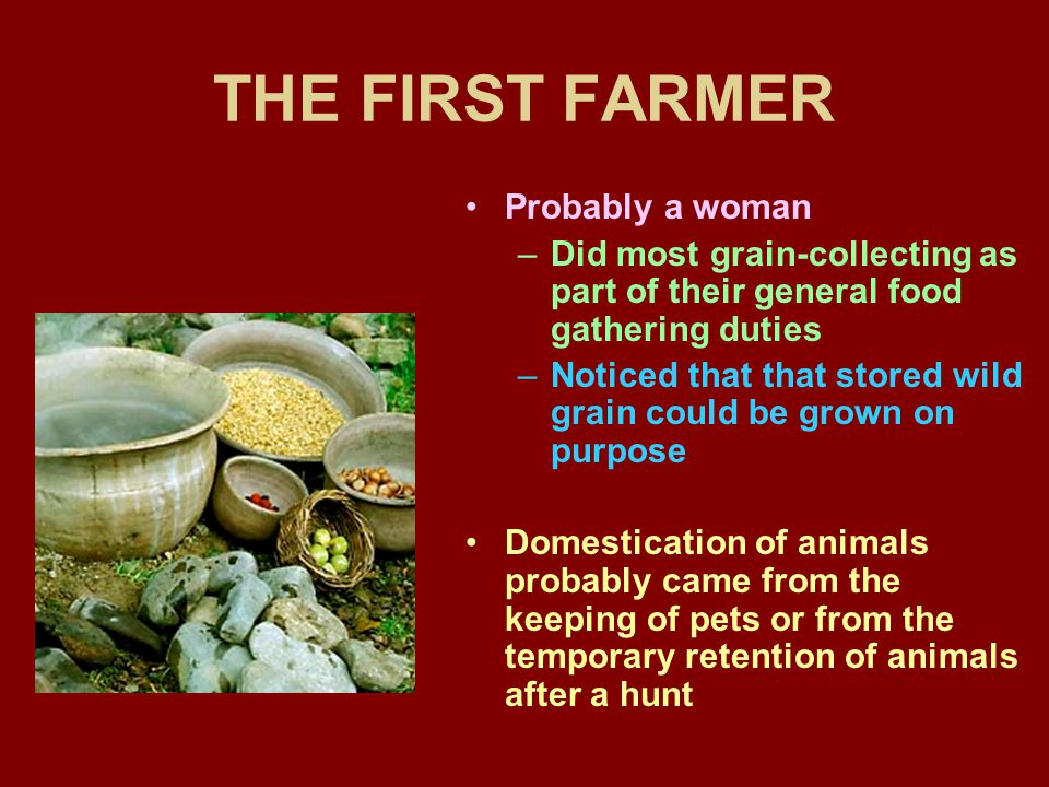THE FIRST FARMER Probably a woman
