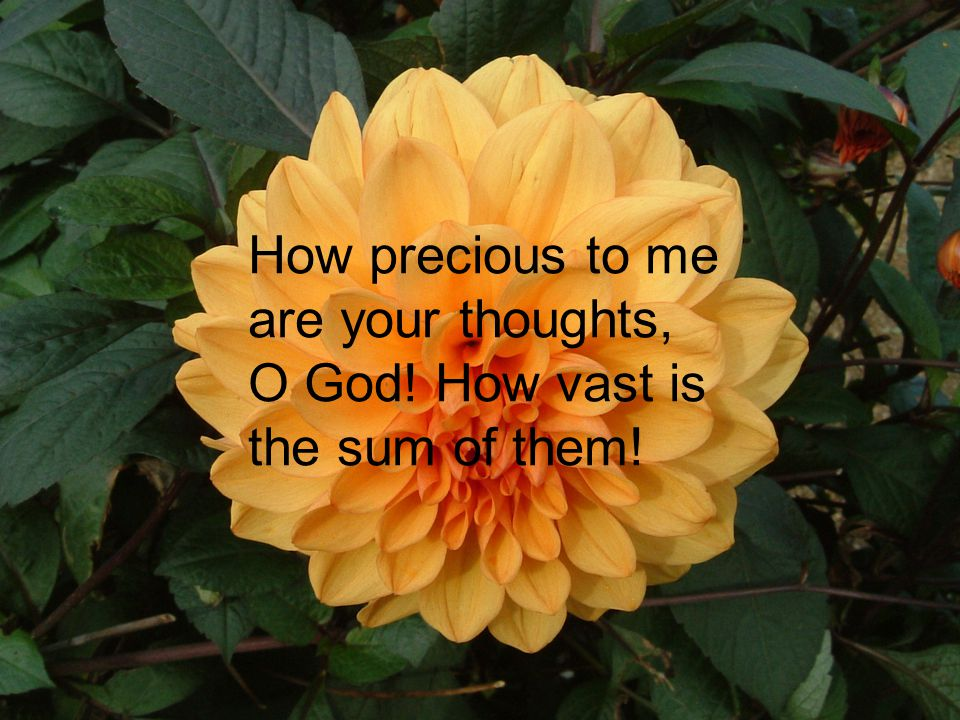 How precious to me are your thoughts, O God