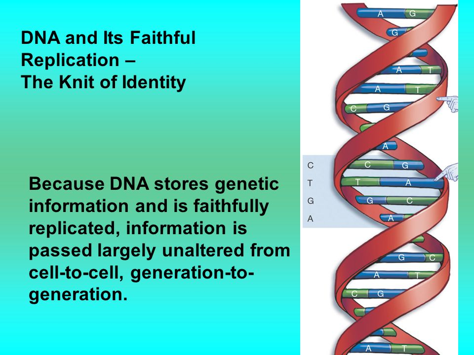 DNA and Its Faithful Replication –