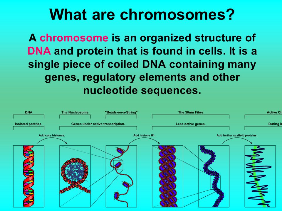 What are chromosomes.