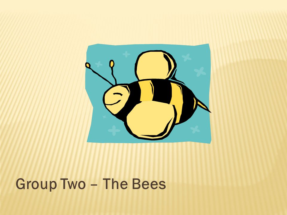 Group Two – The Bees