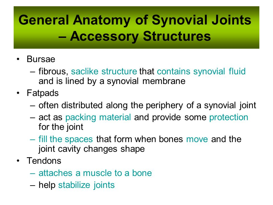 General Anatomy of Synovial Joints – Accessory Structures