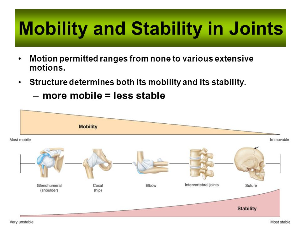 Mobility and Stability in Joints
