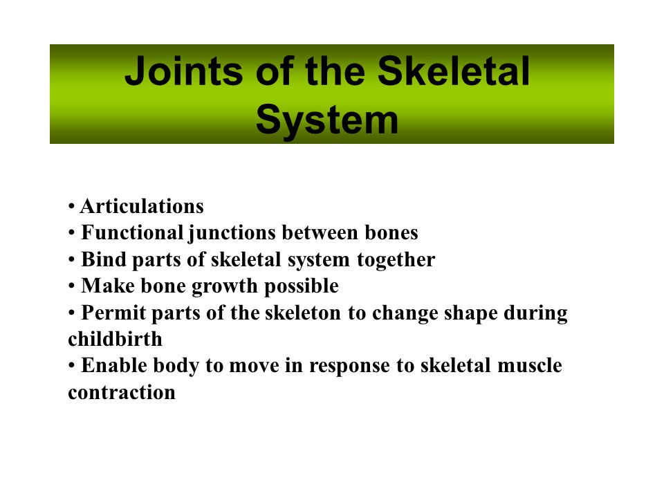 Joints of the Skeletal System