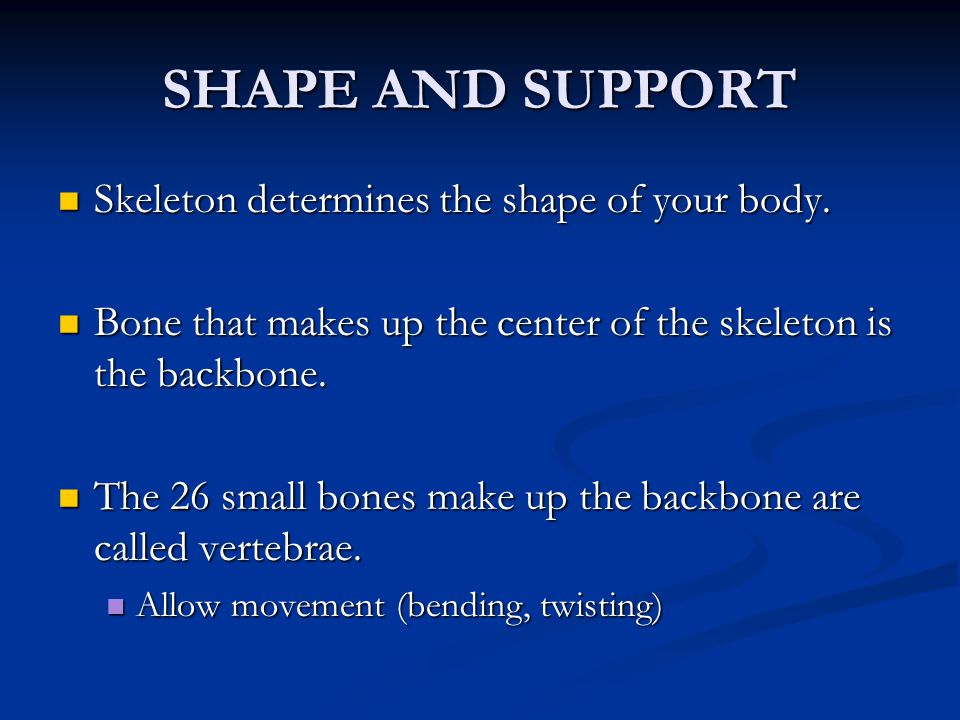 SHAPE AND SUPPORT Skeleton determines the shape of your body.