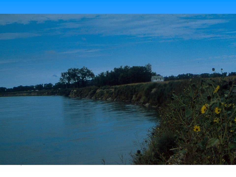 Although dark, this is a windrow revetment on Missouri River