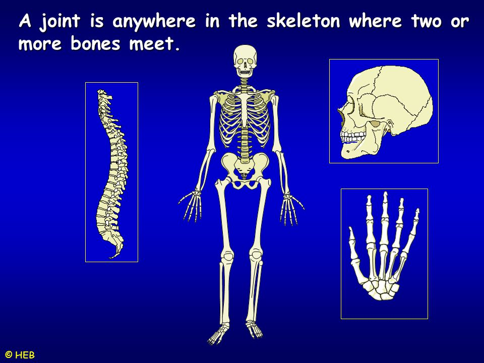A joint is anywhere in the skeleton where two or more bones meet.