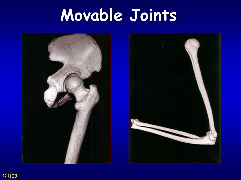 Movable Joints © HEB