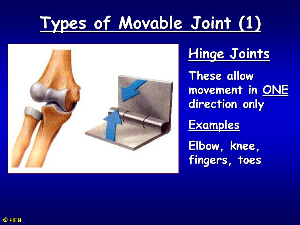 Types of Movable Joint (1)