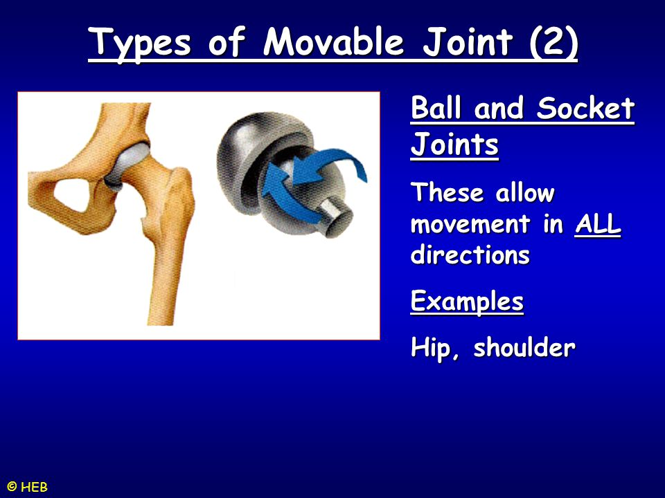 Types of Movable Joint (2)