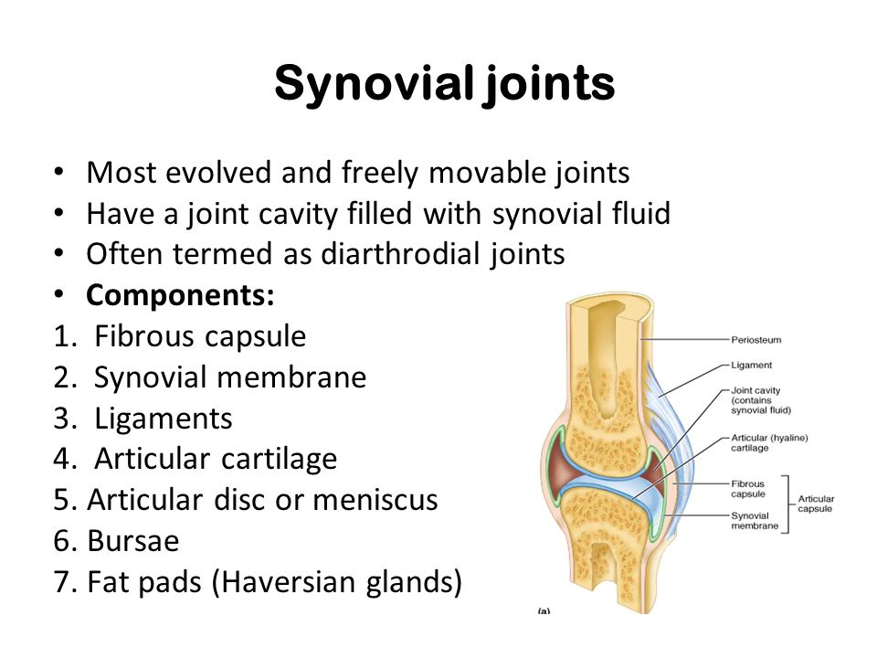 Synovial joints Most evolved and freely movable joints