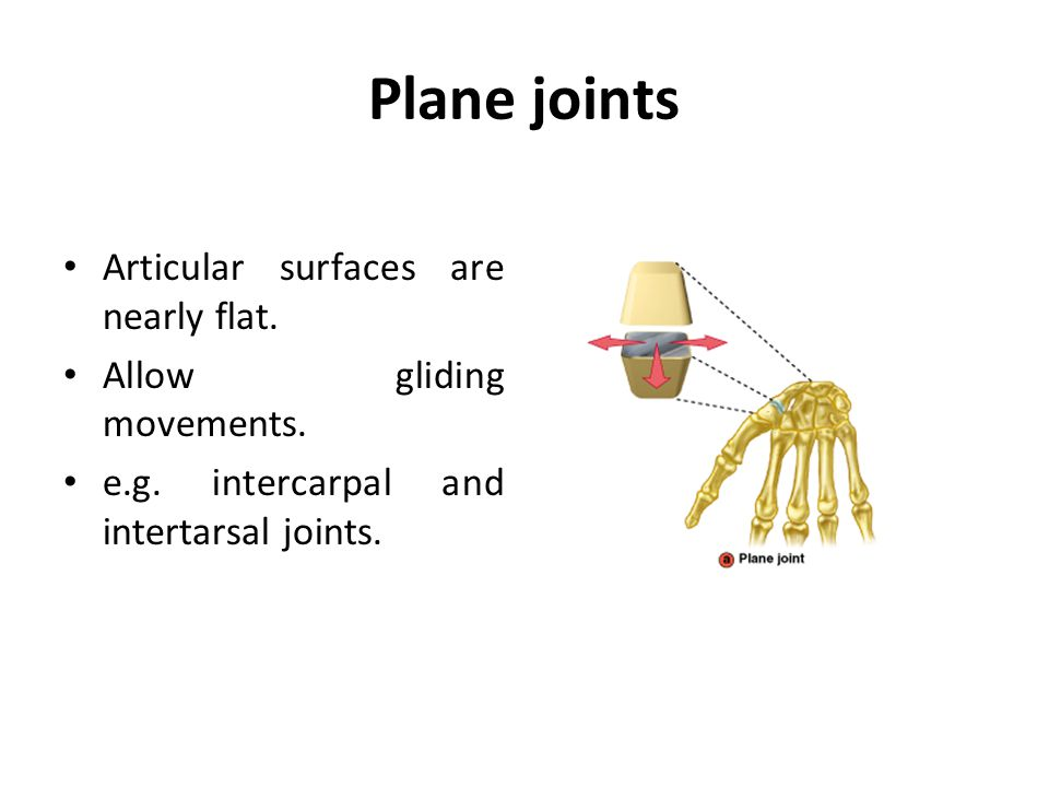 Plane joints Articular surfaces are nearly flat.