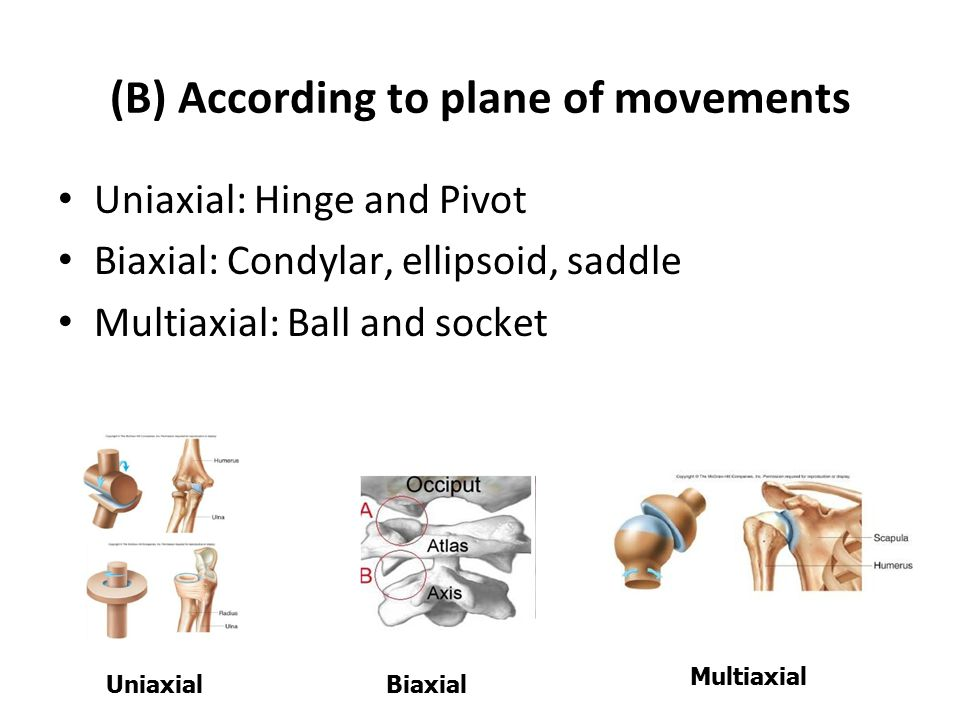 (B) According to plane of movements