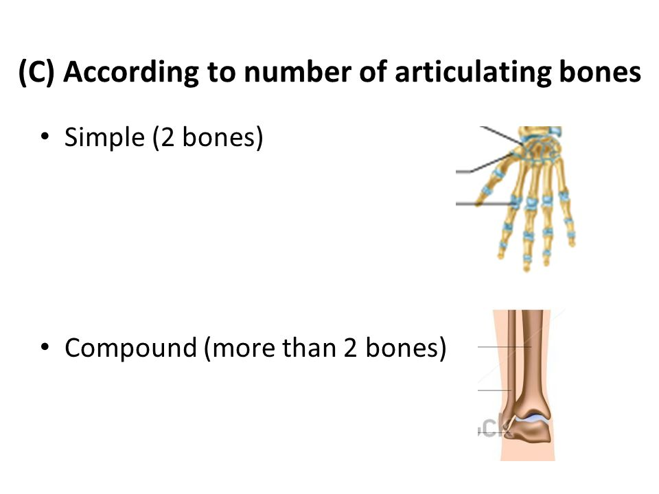 (C) According to number of articulating bones