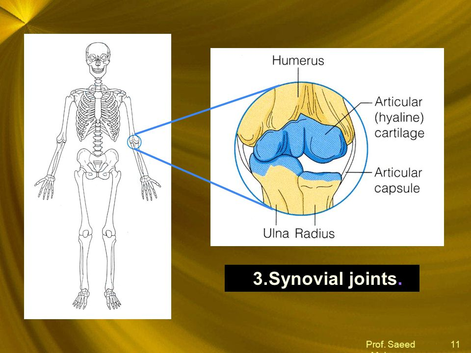 Synovial joints. Prof. Saeed Makarem