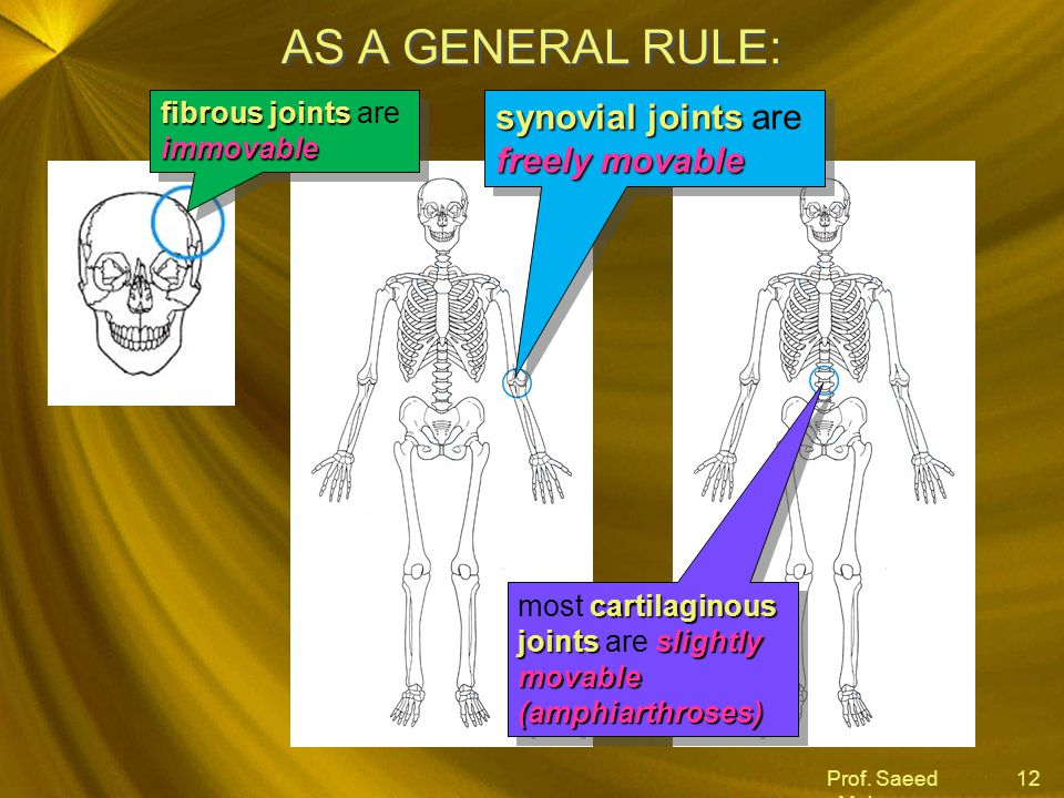 AS A GENERAL RULE: synovial joints are freely movable