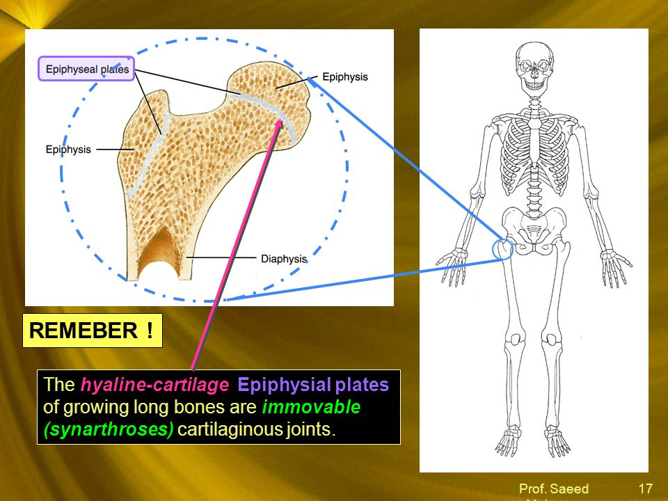 REMEBER ! The hyaline-cartilage Epiphysial plates of growing long bones are immovable (synarthroses) cartilaginous joints.