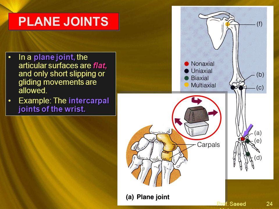 PLANE JOINTS In a plane joint, the articular surfaces are flat, and only short slipping or gliding movements are allowed.