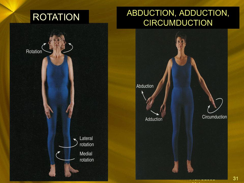 ABDUCTION, ADDUCTION, CIRCUMDUCTION