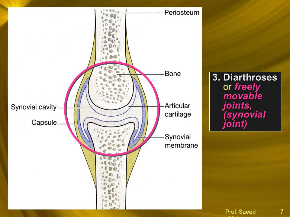 Diarthroses or freely movable joints, (synovial joint)