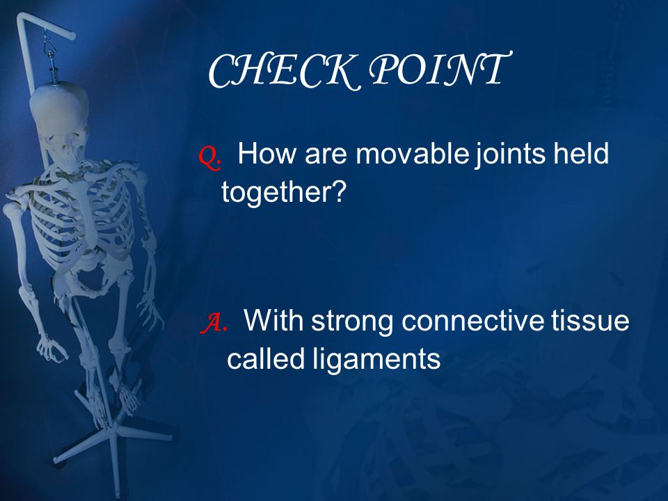 CHECK POINT Q. How are movable joints held together