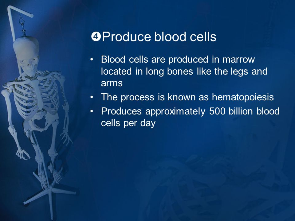 Produce blood cells Blood cells are produced in marrow located in long bones like the legs and arms.
