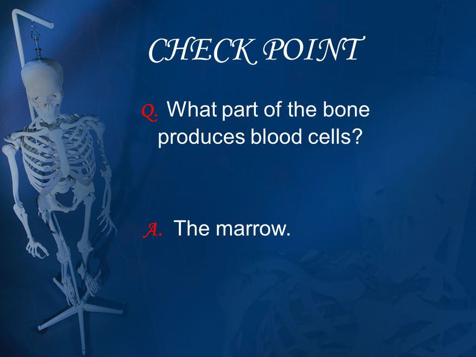 CHECK POINT Q. What part of the bone produces blood cells