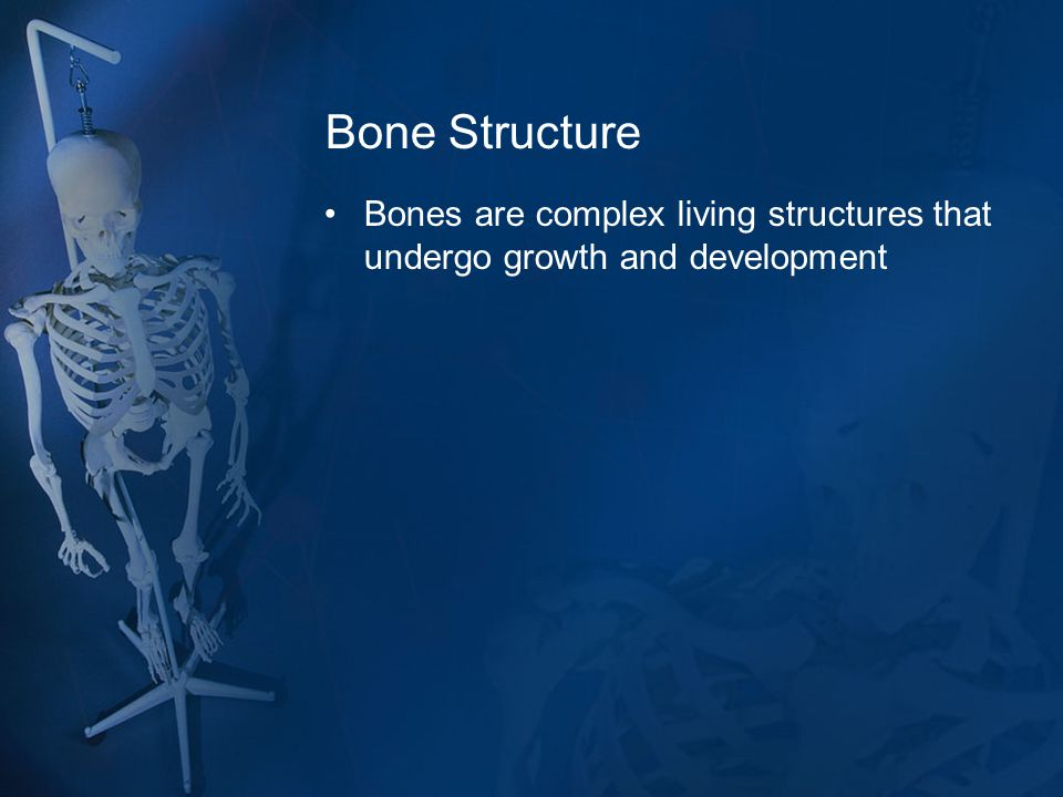 Bone Structure Bones are complex living structures that undergo growth and development