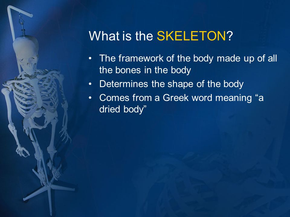 What is the SKELETON The framework of the body made up of all the bones in the body. Determines the shape of the body.