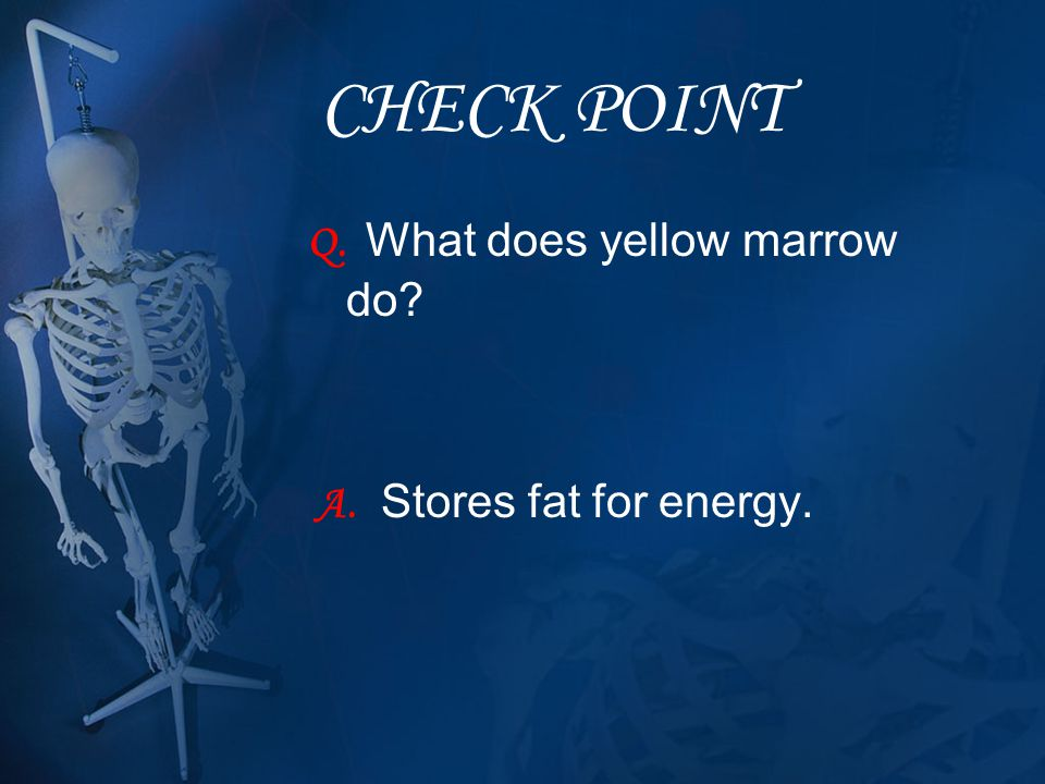 CHECK POINT Q. What does yellow marrow do A. Stores fat for energy.