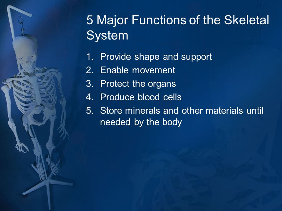 5 Major Functions of the Skeletal System