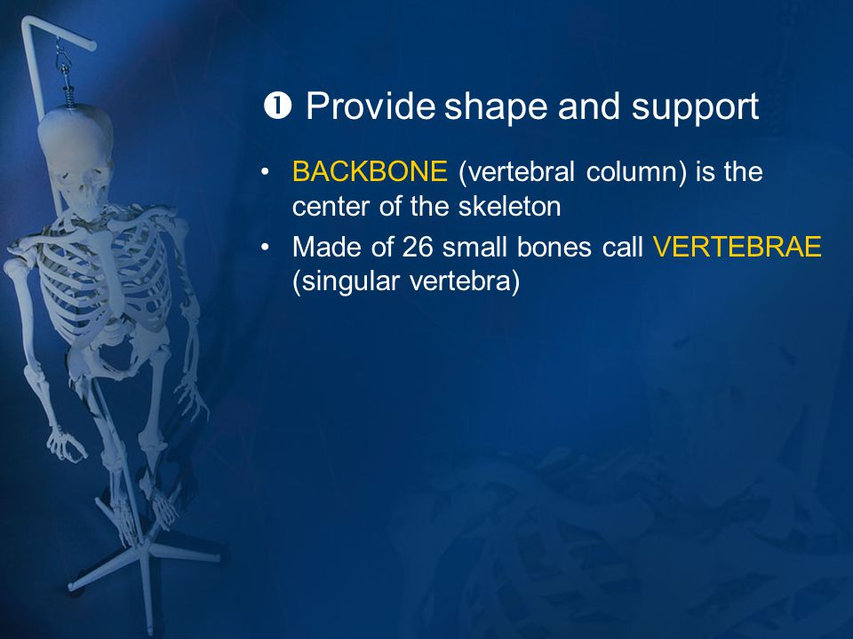  Provide shape and support