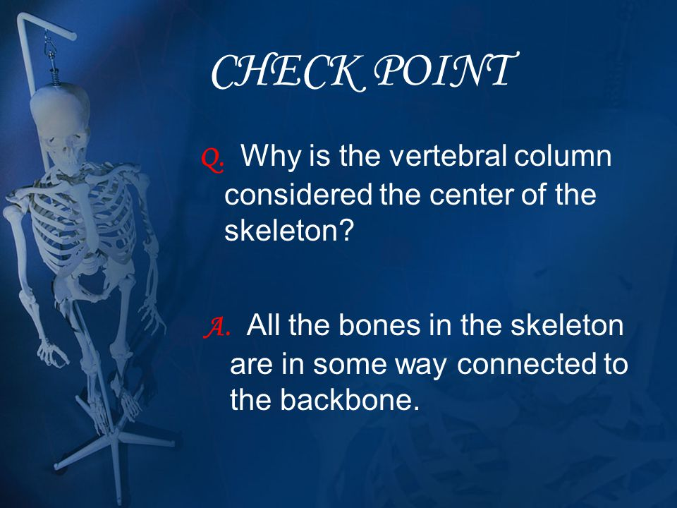 CHECK POINT Q. Why is the vertebral column considered the center of the skeleton