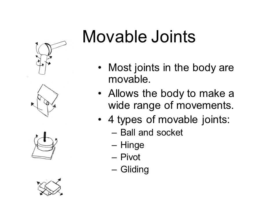 Movable Joints Most joints in the body are movable.