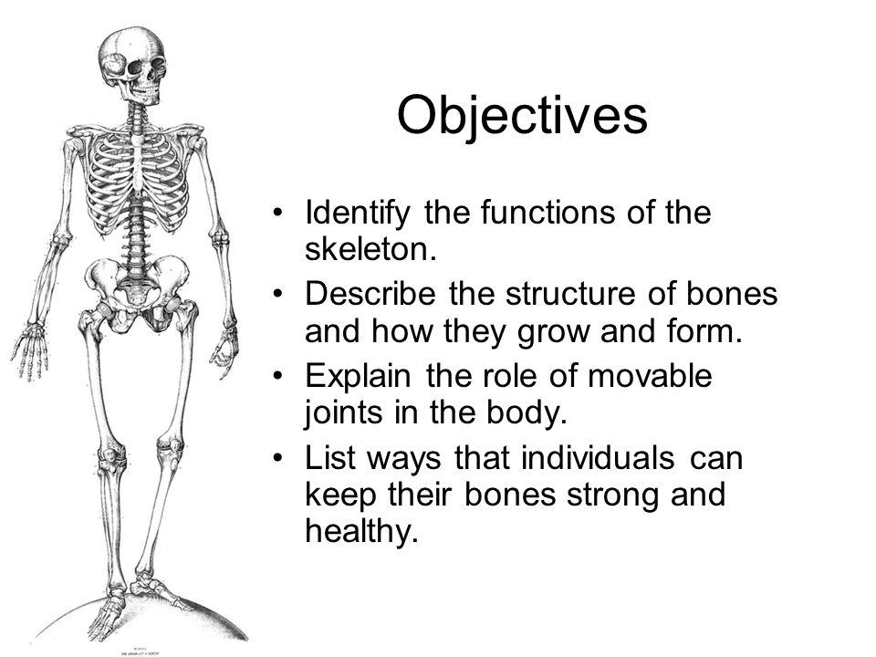 Objectives Identify the functions of the skeleton.