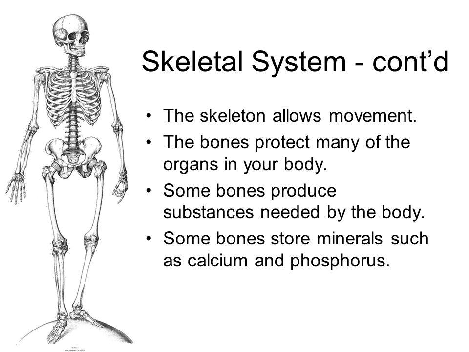 Skeletal System - cont'd