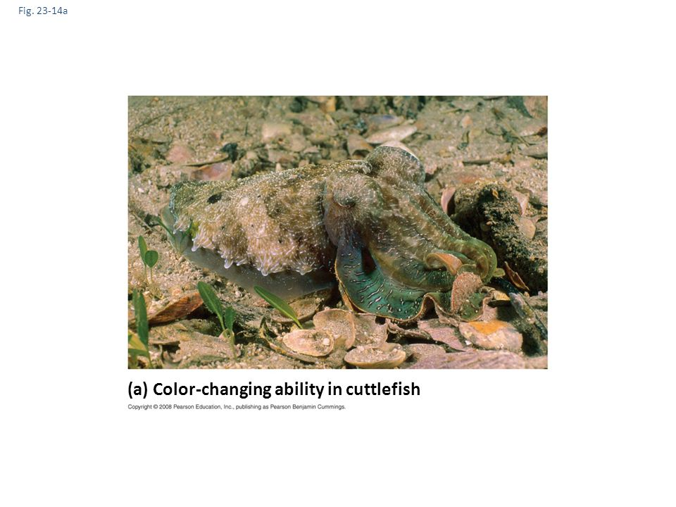 (a) Color-changing ability in cuttlefish